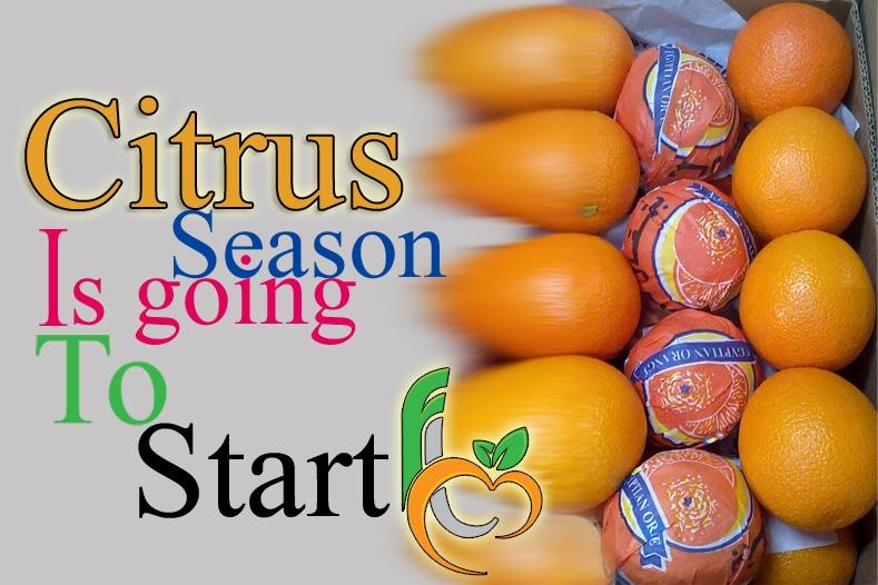 Citrus produce of Egypt