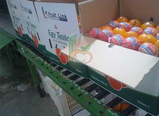 Valencia fruit link fresh produce - Carton valencia ...